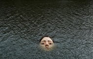 Residents of Bilbao scared by the face of a girl in the river