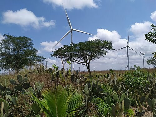 Clean energy but not so much: the wind farms that shake lives and destroy homes in Pernambuco