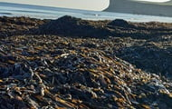 Thousands of dead marine life found on British beaches