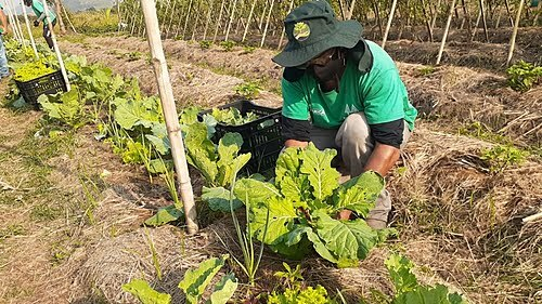 Why farmers and researchers argue that agroecology can cure hunger in Brazil